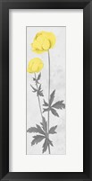 Shinning Bloom Framed Print