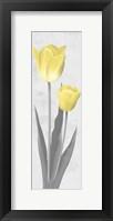 Shinning Bloom 2 Framed Print