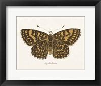 Antique Butterfly II Framed Print