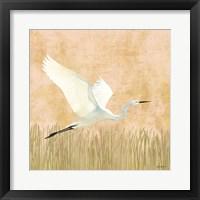 Egret Alighting II Framed Print