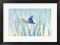 Undersea Ray Framed Print