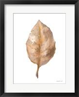 Fallen Leaf II Framed Print