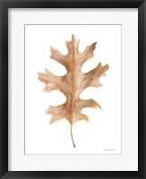 Fallen Leaf I Framed Print