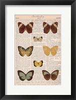 American Butterflies II Framed Print