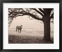 Framed Hazy Horse I