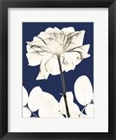Rose Cool Dynasty 2 Framed Print