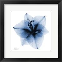 Framed Indigo Amaryllis 1