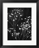 Delicate 1 Framed Print