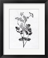 Pressed Herbs 2 Framed Print