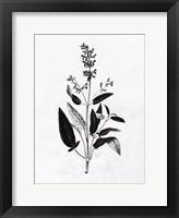Pressed Herbs 3 Framed Print