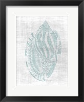 Beautiful Shells 1 Framed Print