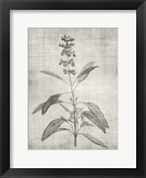 Sepia Botanical 1 Framed Print