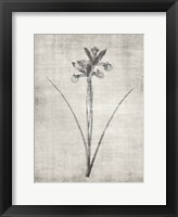 Sepia Botanical 2 Framed Print