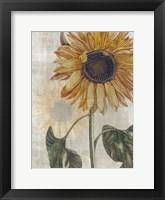 Sunflower 2 Framed Print