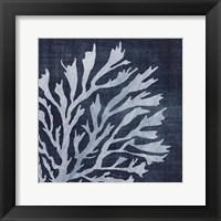 Seaweed 2 Framed Print