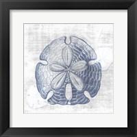 Sand Dollar 1 v2 Framed Print