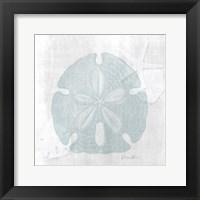 Sand Dollar 1 Framed Print