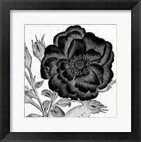 Black and White Bloom 1 Framed Print