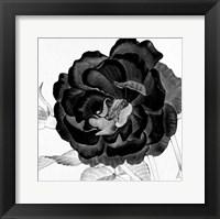 Black and White Bloom 3 Framed Print