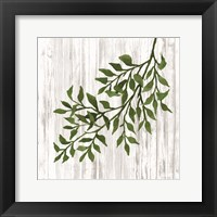 Leaves on White Framed Print