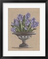 Framed Hyacinth Urn