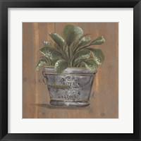 Pretty Plant in Pail Framed Print