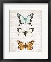 Framed Butterfly Trio