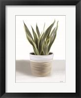 Snake Plant I Framed Print
