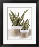 Snake Plant II Framed Print