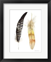 Natural Feathers III Framed Print