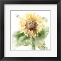 Sunflower Meadow III Framed Print