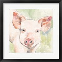 Sunny the Pig I Framed Print