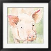 Sunny the Pig II Framed Print