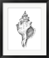Quiet Conch IV Framed Print