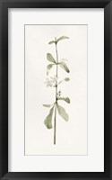 Early Blooms I Framed Print