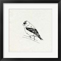 Bird Feeder Friends I Framed Print