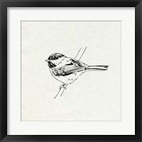 Bird Feeder Friends II Framed Print