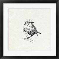 Bird Feeder Friends III Framed Print