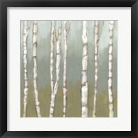Simple Birchline I Framed Print