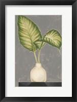 Frond in Vase IV Framed Print