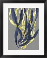 Kelp Embrace I Framed Print