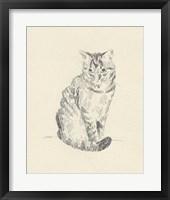 House Cat I Framed Print