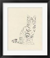 House Cat IV Framed Print