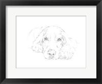 Lazy Dog II Framed Print