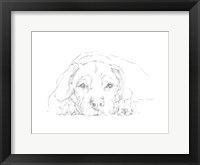 Lazy Dog III Framed Print