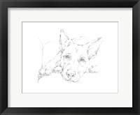 Lazy Dog IV Framed Print