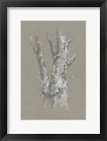 Chalk Birch Study I Framed Print