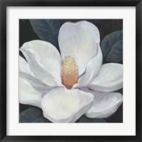 Blooming Magnolia I Framed Print