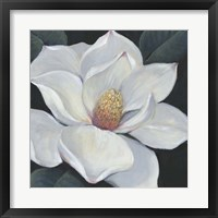 Blooming Magnolia II Framed Print