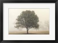 Trees in the Fog I Framed Print